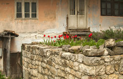 Old dilapidated rustic house. Facade with flowerbed of red tulips Stock Images