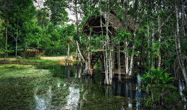 Old dilapidated shack on stilts in the jungle Stock Photography