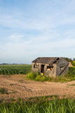 Old dilapidated small wooden barn beside a potato field Royalty Free Stock Photos
