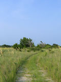 Old dirt path. Dirt path running through a coastal salt marsh royalty free stock images