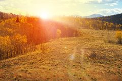 Free Old Dirt Path Climbing Into A Golden Fall Forest Landscape In Colorado With The Bright Light Of Sunset Royalty Free Stock Photography - 160608727