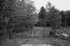 Old dirt road. A abandon road in rural new England done in black and white Stock Images