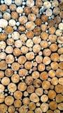 Old dirt tree stumps Stock Photos