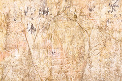 Old and dirty concrete texture Royalty Free Stock Photography