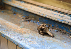 Old dirty spinal vertebra on sill. Broken window royalty free stock photo