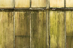 Old and dirty translucent white window with green moss Royalty Free Stock Image