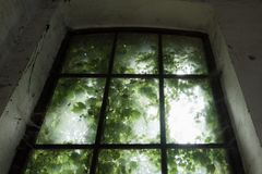 Dirty window. Old and dirty window with green leaves Stock Photography