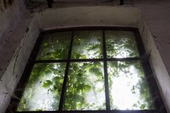 Enchanted old window. Old and dirty window with green leaves royalty free stock photos