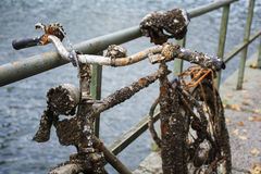 Old discarded bicycle leaning against a railing at the water, fu. Ll of rust, small clams and barnacles, found in the canal, detail shot with selected focus and Royalty Free Stock Photo
