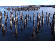 Old dock pilings. Old wood pier or dock pilings sticking out of the water at the ocean Royalty Free Stock Images