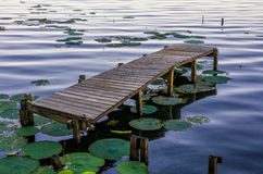 Old dock, Reelfoot Lake, Tennessee. An old dock surrounded by lily pads along the shores of Reelfoot Lake in Tennessee Stock Photography