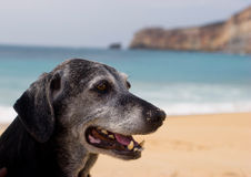 Old Dog Royalty Free Stock Photos