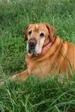 old dog Stock Image