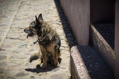 Adult dog abandoned on the street royalty free stock images