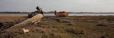 Old dog amongst the wrecks Royalty Free Stock Photo