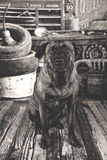 Old dog in antique auto shop Stock Photo