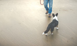 Old dog on the beach.  Stock Photography