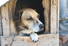 Old dog in a booth stock photography