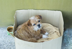Old dog in a carton box Stock Image
