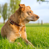 Old dog Stock Photos