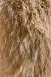 Old dog fur texture. Background Royalty Free Stock Image