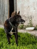 Old dog. Guarding the homestead. Stock Images