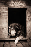 Old dog in kennel. Vertical format colour image of sad old dog in kennel stock photo