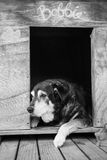 Old dog in kennel Royalty Free Stock Photography