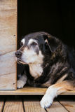 Old dog in kennel Royalty Free Stock Images