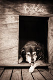 Old dog in kennel Royalty Free Stock Photos