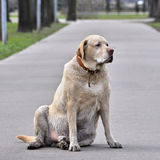 Old dog in a park Royalty Free Stock Image