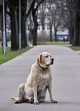 Old dog in a park Royalty Free Stock Photos