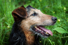 Old dog Stock Images