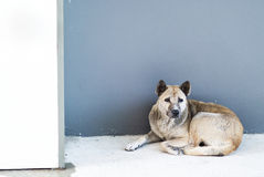 Old dog resting on the floor Stock Photos