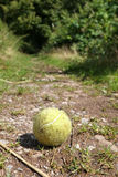 Old dog's tennis ball Royalty Free Stock Image