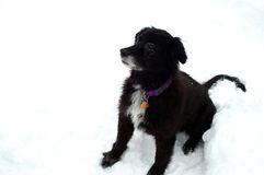 Old Dog Sitting in Snow Royalty Free Stock Photography