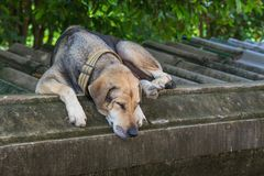 The old dog sleep  on the wall. Under sunlight Royalty Free Stock Images