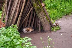 An old dog sleeps under the tree in the courtyard. Close view royalty free stock images