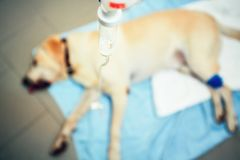 Old dog in veterinary clinic. Stock Photo