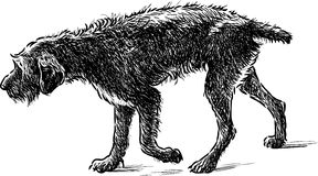 Old dog on a walk. Vector drawing of a walking shaggy dog Stock Photo