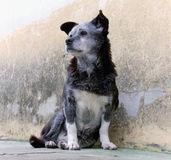 Old Dog Stock Photo