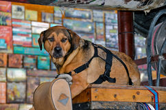 Old dog on wood crate Royalty Free Stock Photography