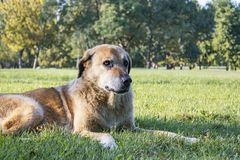 Old dog is sitting in natural garden, friendly animal