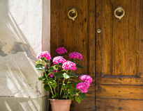 Old door with flower vase in a Tuscan town Stock Photos