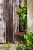 Old Door and Foliage. Old broken door of a ruined house with a frame of green foliage Stock Photography