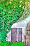 Old door between the ivy in hdr. In a old house Royalty Free Stock Image