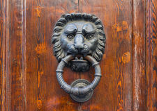 Old door knocker in Florence. Old door knocker in the form of a lion head, Florence, Italy Royalty Free Stock Photography