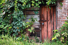 Old door locked with padlock. With green leaves of wild vine around walls Royalty Free Stock Photos