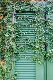 Old door locked with vine cover the door Royalty Free Stock Image