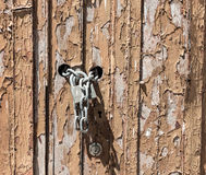 Old door locked Royalty Free Stock Images